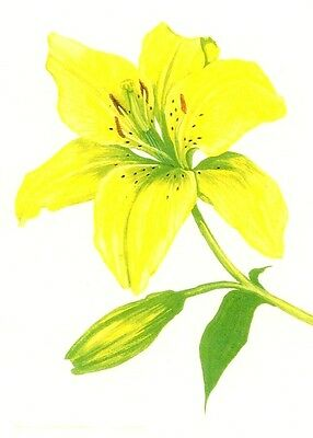 Aceo Print Of Painting Ryta Yellow Lily Easter Spring Flowers Folk Art Cottage