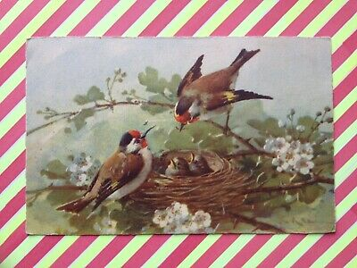 cpa Illustration Drawing signée C. KLEIN Nature Morte Still Life OISEAUX BIRDS