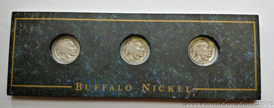 1934-D 1935-S 1937-P Buffalo Nickels In Holder