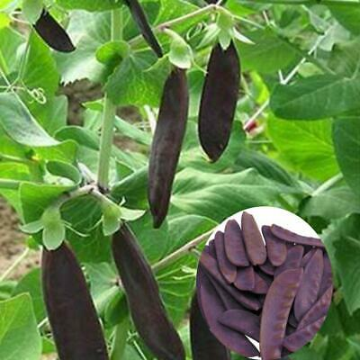10Pcs Vegetable Garden Nursery Edible Fast-Growing Plant Pea Seeds WST 01