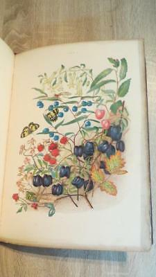 """1860 """"SOME OF MY BUSH FRIENDS IN TASMANIA"""" by MEREDITH - COLOUR PLATES - SCARCE"""