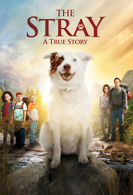 The Stray [New DVD]