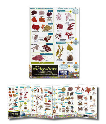 Field Guide The Rocky Shore Name Trail Laminated Identification Chart Poster