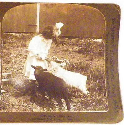 Antique Stereoview Mary's Little Pets Girl Feeding Lambs 1907 H C White Co