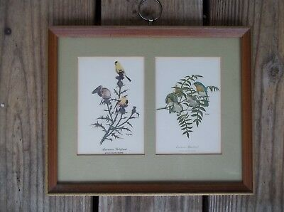 Vintage Ray Harm American Goldfinch Eastern Bluebird Framed Matted Double Cards