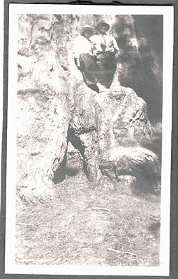Vintage 1919-29 Sequoia National Park California Huge Redwood Tree Old Photo