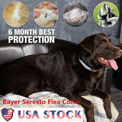 US Bayer Seresto Flea & Tick Collar for Small Dogs under 8kg (18 lbs) and Cat