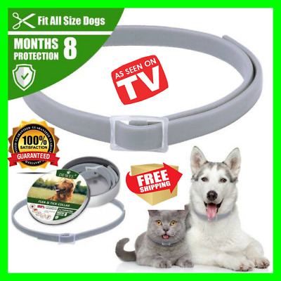 Flea Tick Collar for Small Dogs under 8kg (18 lbs) and Cats 8 month Protection