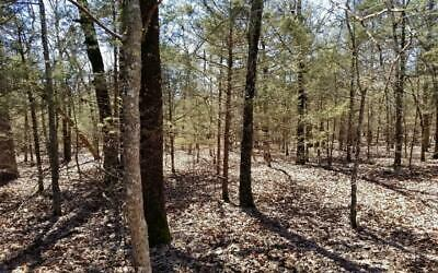 0.23 Acres in Cleburne County, Arkansas!