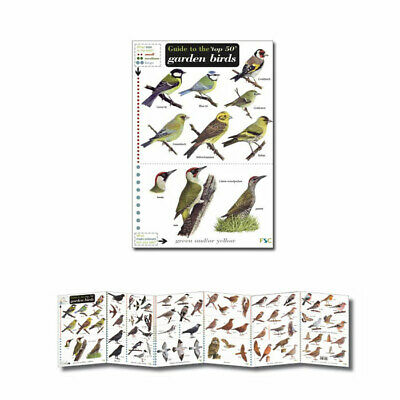British Wild Birds Laminated Field Guides Identification Posters Owls Ducks etc