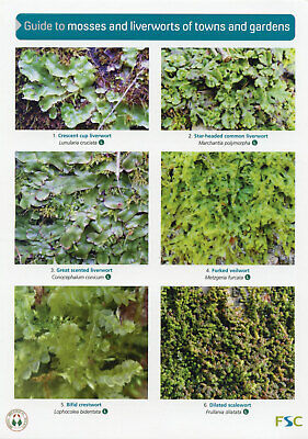 Fungi, Lichens, Mosses, Liverworts Laminated Field Guides Identification Posters