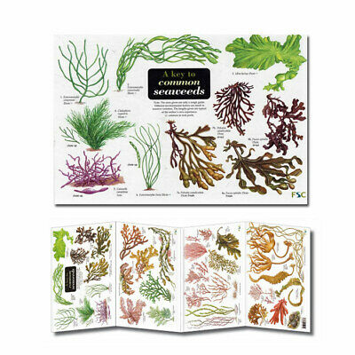 Rockpooling, Beachcombing Laminated Field Guides Identification Posters ID Chart