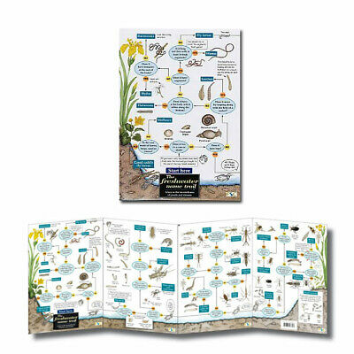 Pond Dipping, Freshwater Laminated Field Guides Identification Posters ID Charts