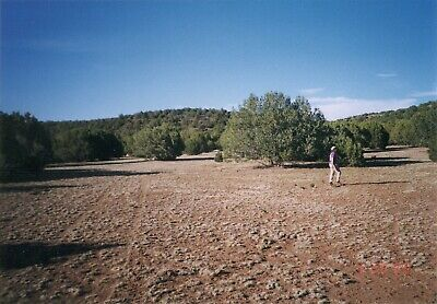 Vacant 17.37 acre land parcel that is covered with juniper trees