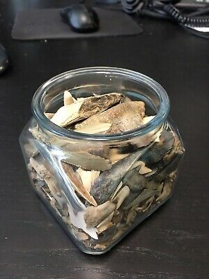 Huge Lot of Fossil Shark teeth From Virginia - Lot Of 500+++