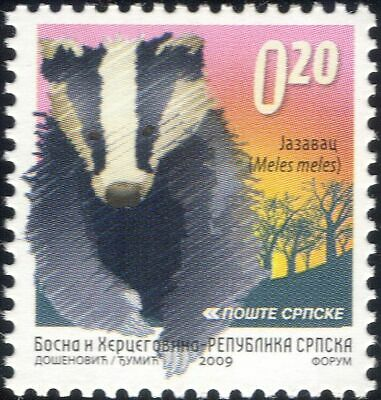 Bosnia 2009 Badger/Animals/Wildlife/Nature/Conservation/Badgers 1v (bhs1029)