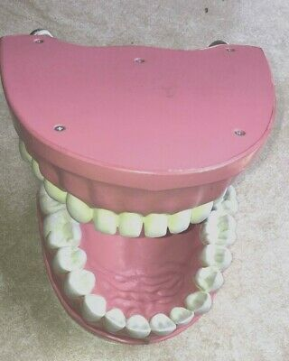 Full Denture Model, Dental Model, Teeth size 5x8 in