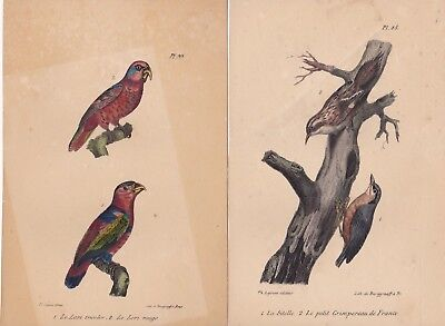 1828 Two Antique Prints (4 birds) - Tree-creeper, Nuthatch, Red Lori - Buffon