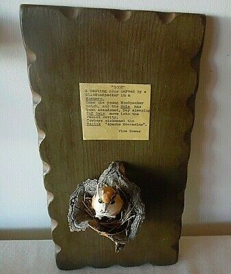 Gila Woodpecker Small Saguaro Boot Nest Mounted On Plaque W/Elf Owl In Nest
