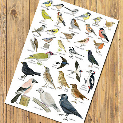 British Garden Birds Identification Chart Wildlife A4 Card Poster Art Print