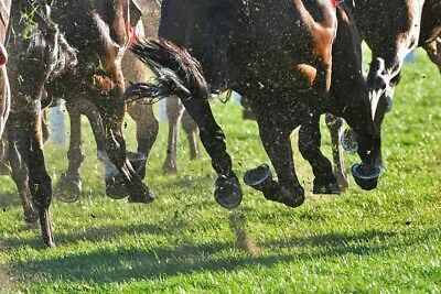 Horse Racing Tips - Over £75k Profit Since 2013. Independently Verified. 1 Month