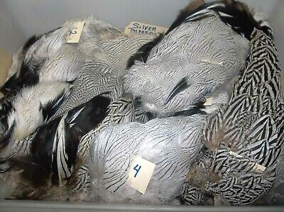 hot orange     SBF187 Silver Pheasant Body Feathers