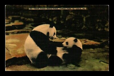 Dr Jim Stamps Us Panda Meets Panda Forest Park St Louis Missouri Linen Postcard