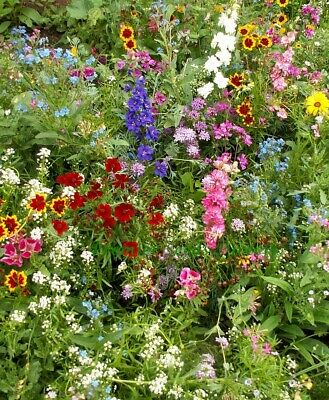 Flower Mix Full Sun - Native And New World Annuals 10 Gram - 8 Sq Meters