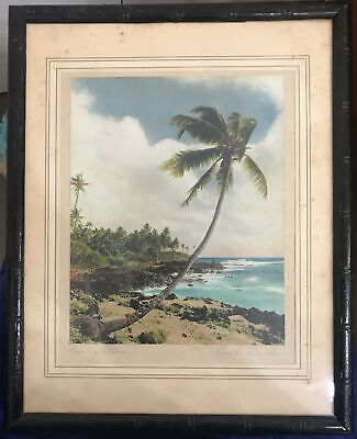 1940's Vintage Photograph By Edithe Beutler 'Leaning Palms'