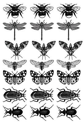 "Insect Mania 21 pcs 1"" Black Fused Glass Decals 5"" X 3-1/2"" Card 19CC1143"