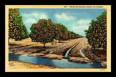 Dr Jim Stamps Us Irrigated Orange Grove California Linen Postcard