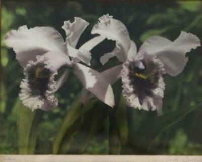 1930's Vintage Hand Colored Photograph By Edithe Beutler 'Orchids'