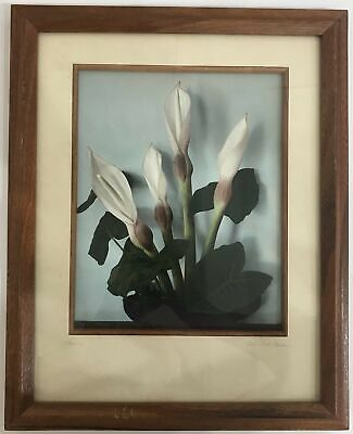 1940's Vintage Hand Colored Photograph By Edithe Beutler 'Opi'