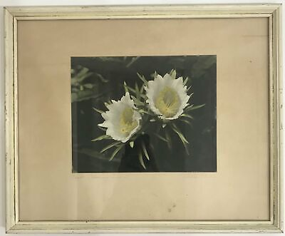 1940's Vintage Hand Colored Photograph By Edithe Beutler 'Night-Blooming Cereus'