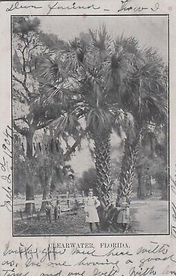 Lot 2183: Crazy Early Postcard 1904 Clearwater Florida Fl