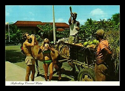 Dr Jim Stamps Drinking Coconut Water Cayman Islands Continental Size Postcard