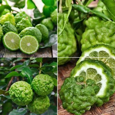 30pcs Rare Kaffir Lime Seeds Tree Garden Plants Lemon Garden Bonsai Pot Top P2F5