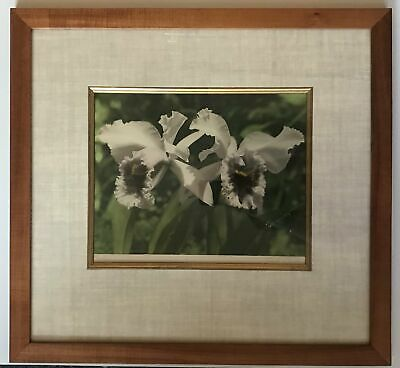 1940's Vintage Hand Colored Photograph By Edithe Beutler 'Orchids' Framed