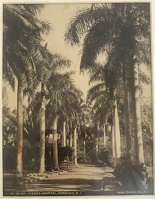 1880's Albumen Photograph By Davey Of Palms At Queens Hospital Hawaii