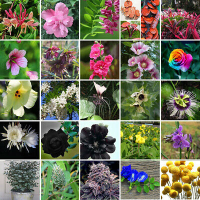 Various Flower Seed Garden Mix Heirloom Potted Rare Flower Plant Ornamental New