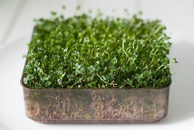 Organic Sprouting / Micro Green Seeds - Broccoli Calabrese - 40 Gram