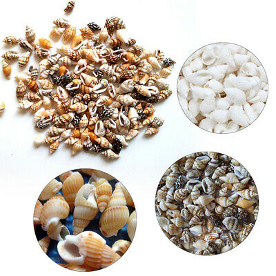 100pc Natural Shells Seashells Beach Shell Wedding Display Craft Aquarium Decor