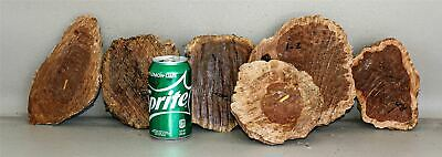 Red Mallee, Grey Box, Mixed Species Australian Exotic Burl Caps  SCR484