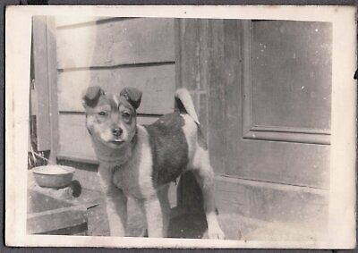 Vintage Photograph 1924 Asian Oriental Dog Puppy Food Bowl Tokyo Japan Old Photo