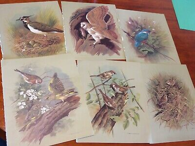 bird prints from old books great for decoupage altered art journals craft 17