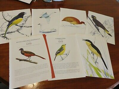 bird prints from old books great for decoupage altered art journals craft 14