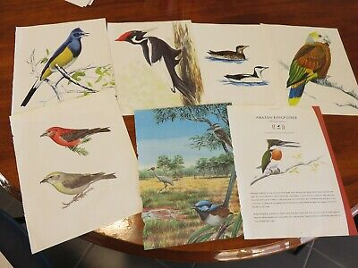 bird prints from old books great for decoupage altered art journals craft 4