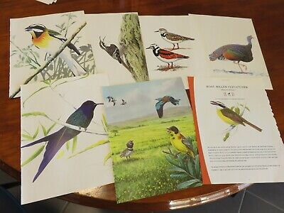 bird prints from old books great for decoupage altered art journals craft 3