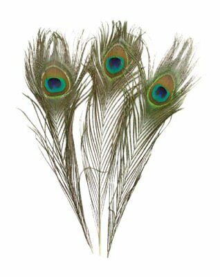 KAYSO 100 Piece Real Natural Peacock Feathers, 10 to 12