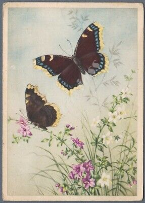 1930s Postcard Beautiful Butterfly Nymphalis antiopa Mourning Cloak